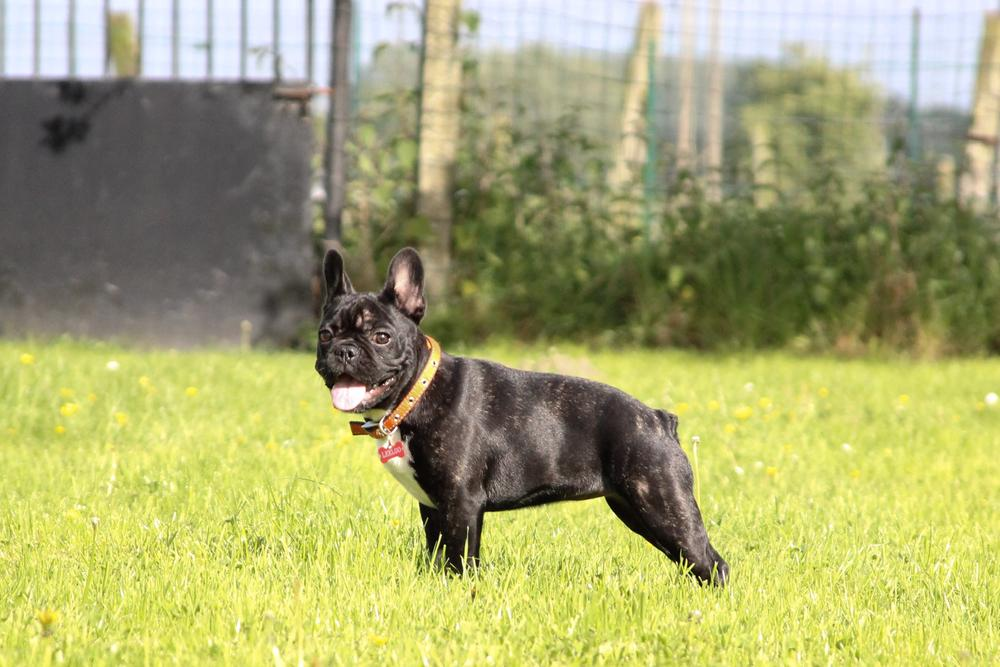 Photo in Animal #dog #bulldog