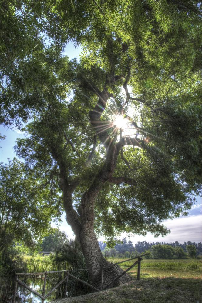 L'albero della vita... by Desmo Crocchy