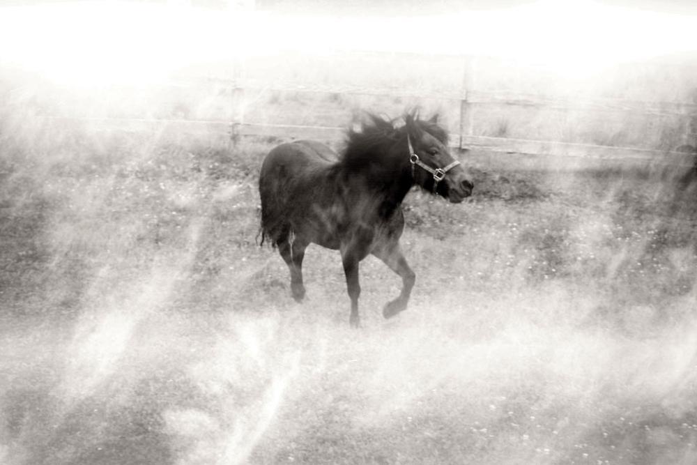Photo in Animal #horse #poney #mini #blackandwhite #animals #barn #foggy