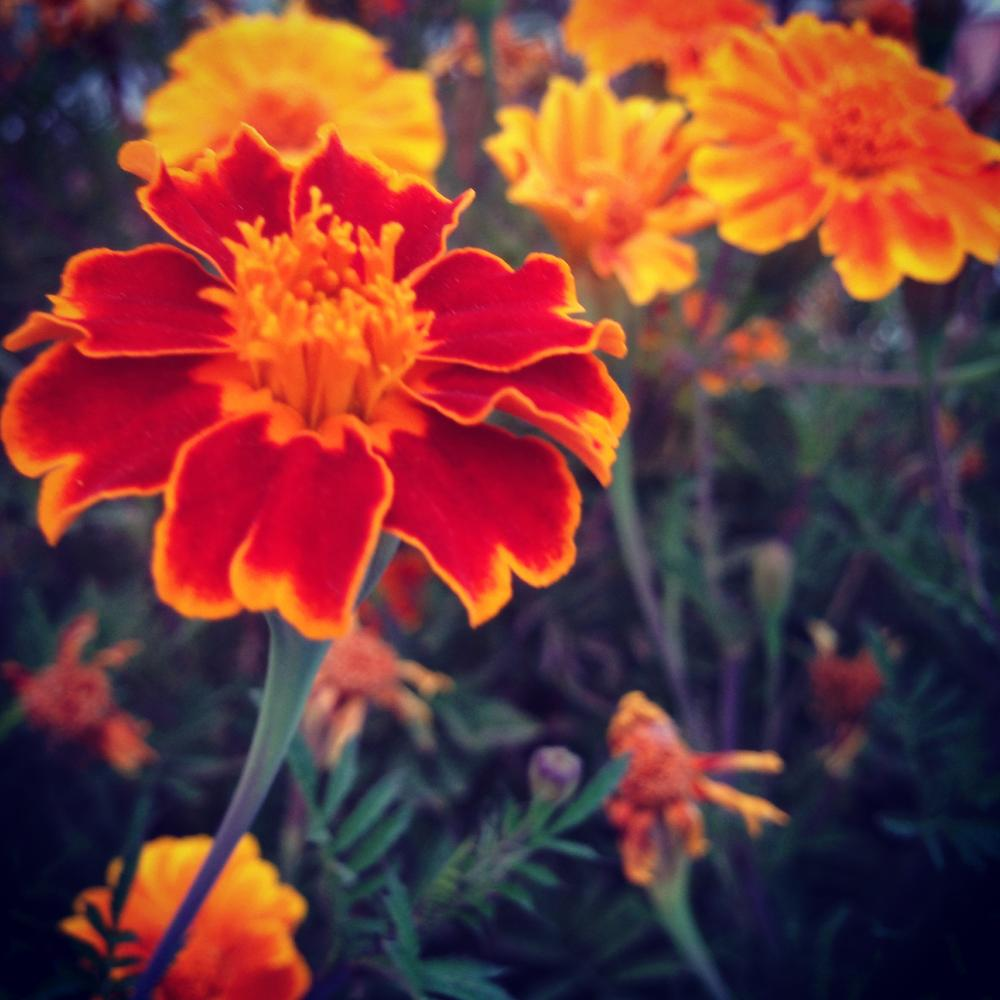 flower by paria-ostadi