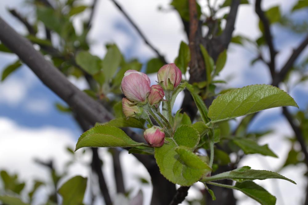 Photo in Random #flowers #flower #nature #bud #d3100 #nikon #nikon d3100