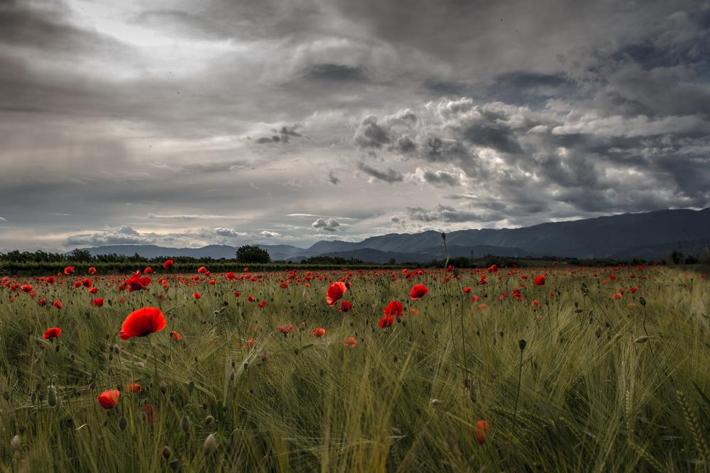 Photo in Landscape #poppies #montains #clouds #green #red #italy #veneto