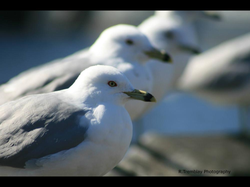 IMG_0156 by Rus Tremblay
