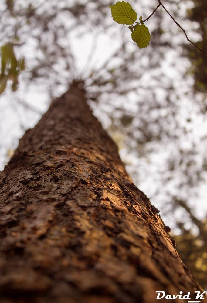 The tree :) by David Kozubík