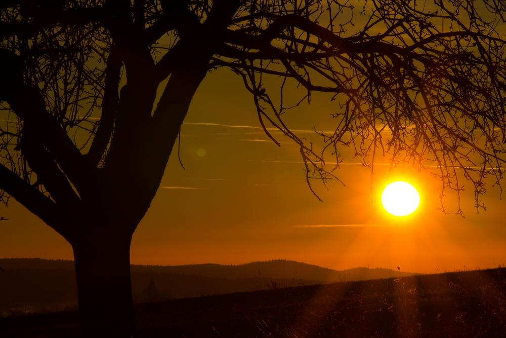 Photo in Nature #sun #day #picoftheday #photooftheday #canon #1100d #telephoto #lens #tree #and #lensflare #nature #spring
