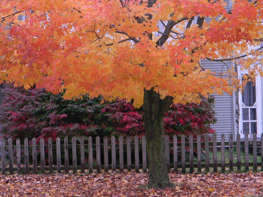Brilliant Autumn. Loudonville, OH. USA. by mbbenfield