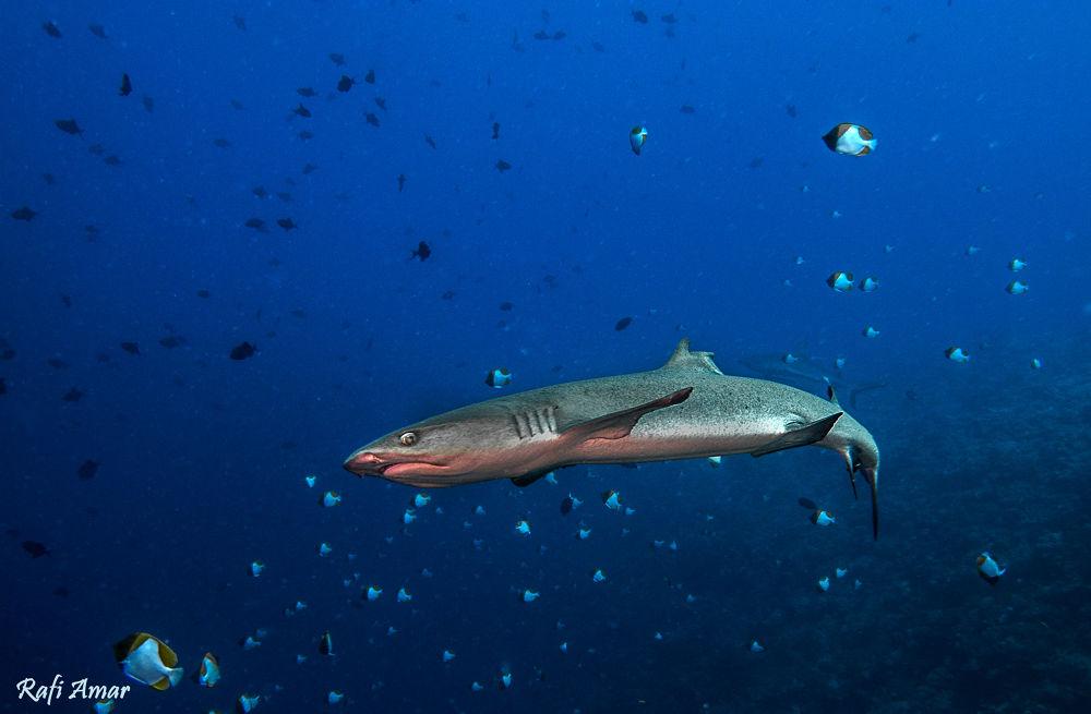 Photo in Underwater #underwater #shark #sea #ypa2013