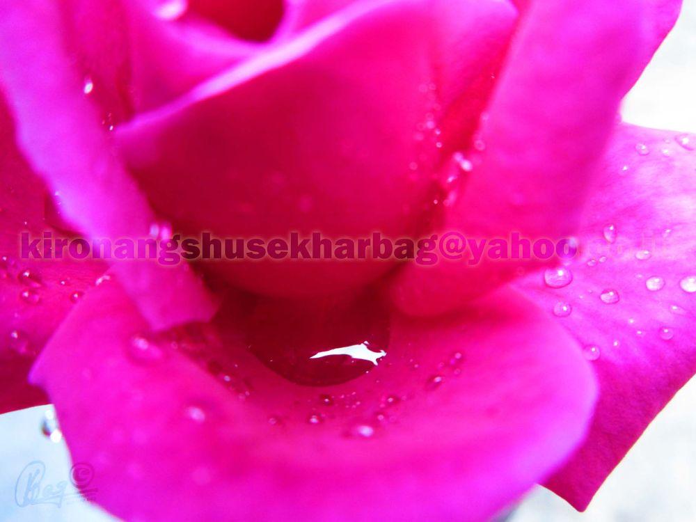 07-01-2012 (25) by Kironangshu Sekhar Bag