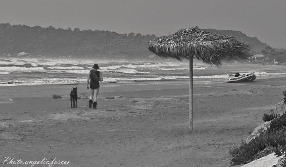 BETWEEN SEASONS There's always OUR FAITHFUL FRIEND THE DOG by S,J,V John Vasilopoulos