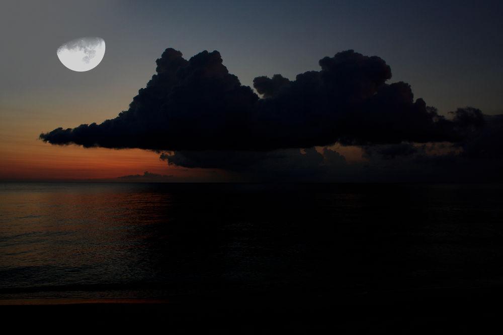 Nature at Night 1 by Jorge Coromina