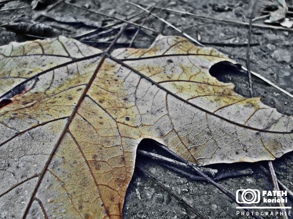 automn 2 by fateh93