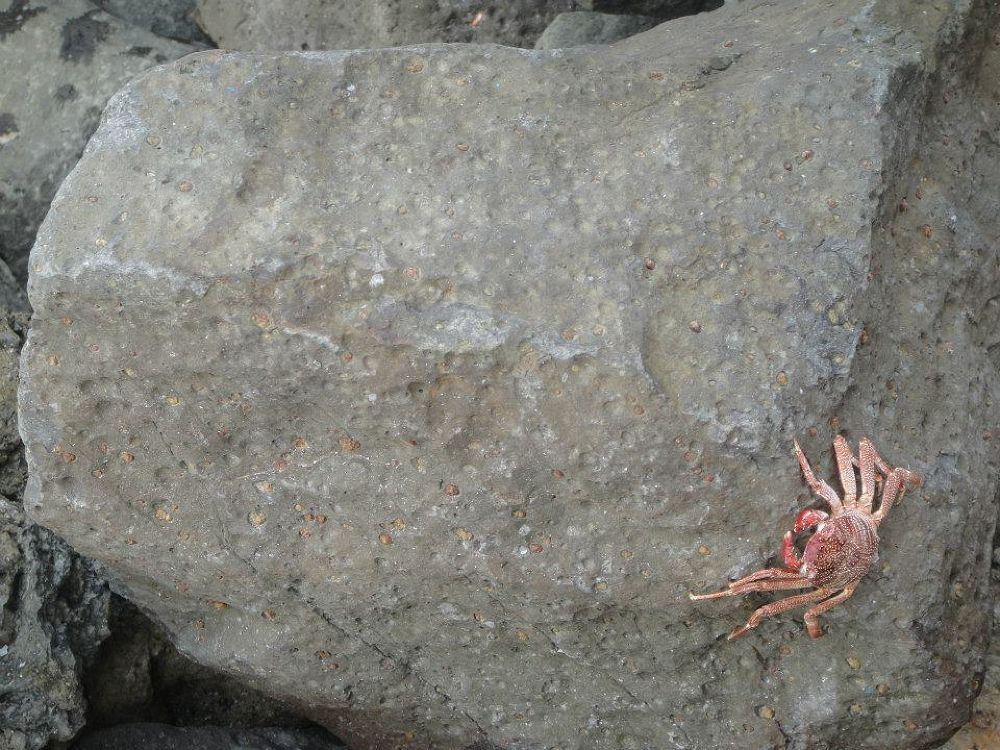 kepiting Laut by hariste