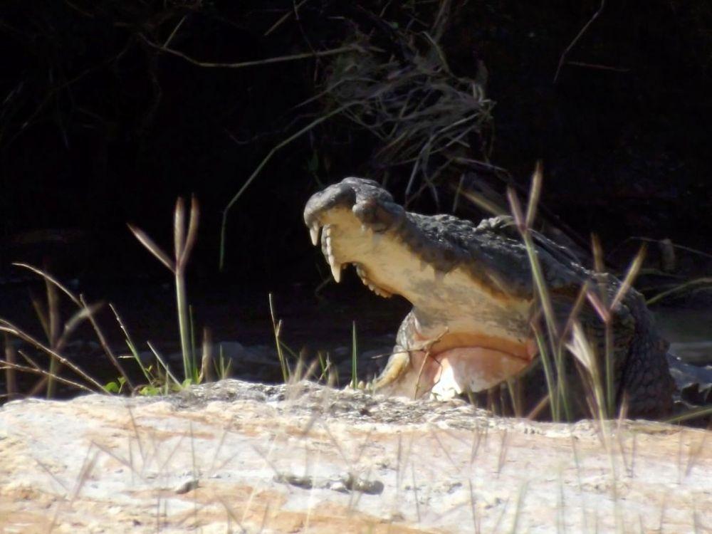 croc enhanced by Chris Roughley