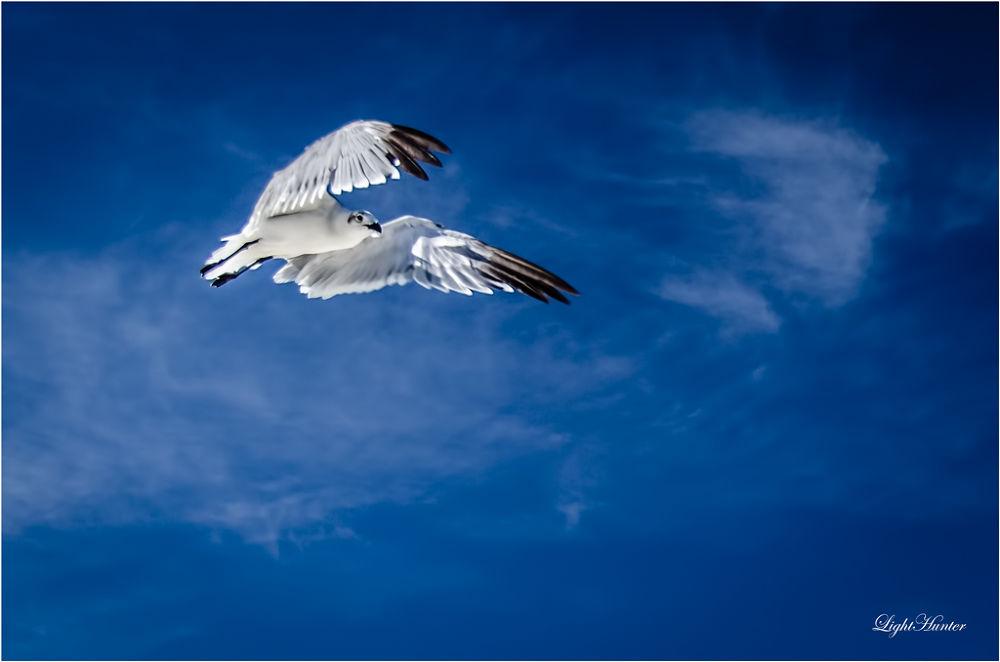 Freedom ... by Zoran Dujić - LightHunter