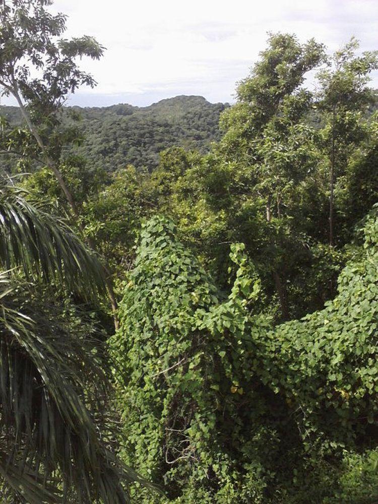 honduras jungle 5 by TellOfVisions