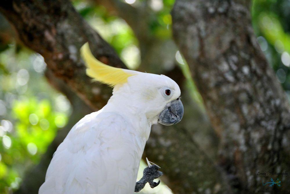 Domestic Birds_00006 by lennylacey