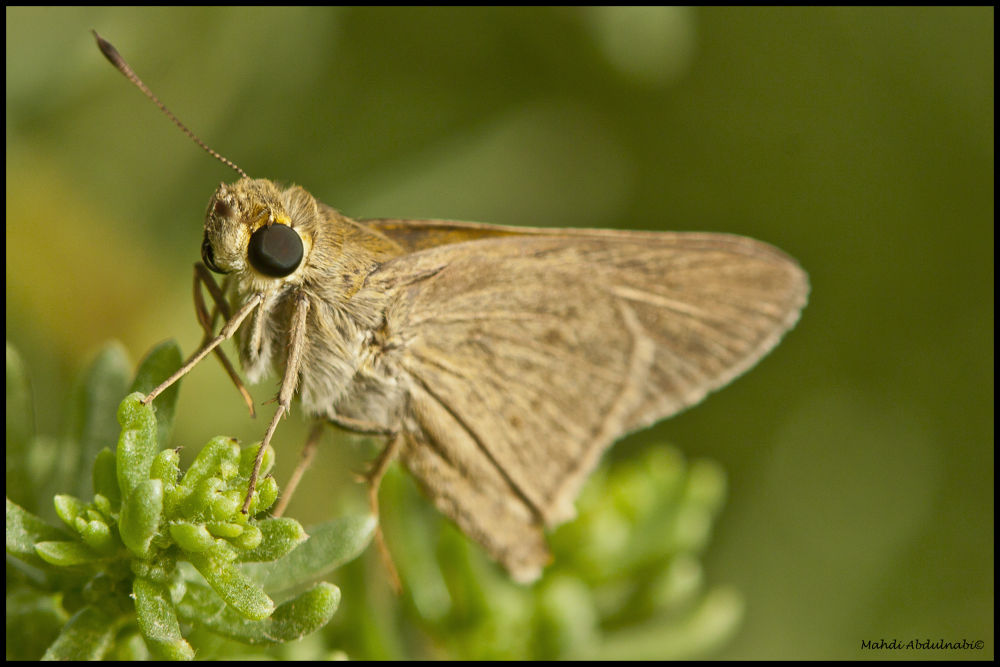 insect look by mantder