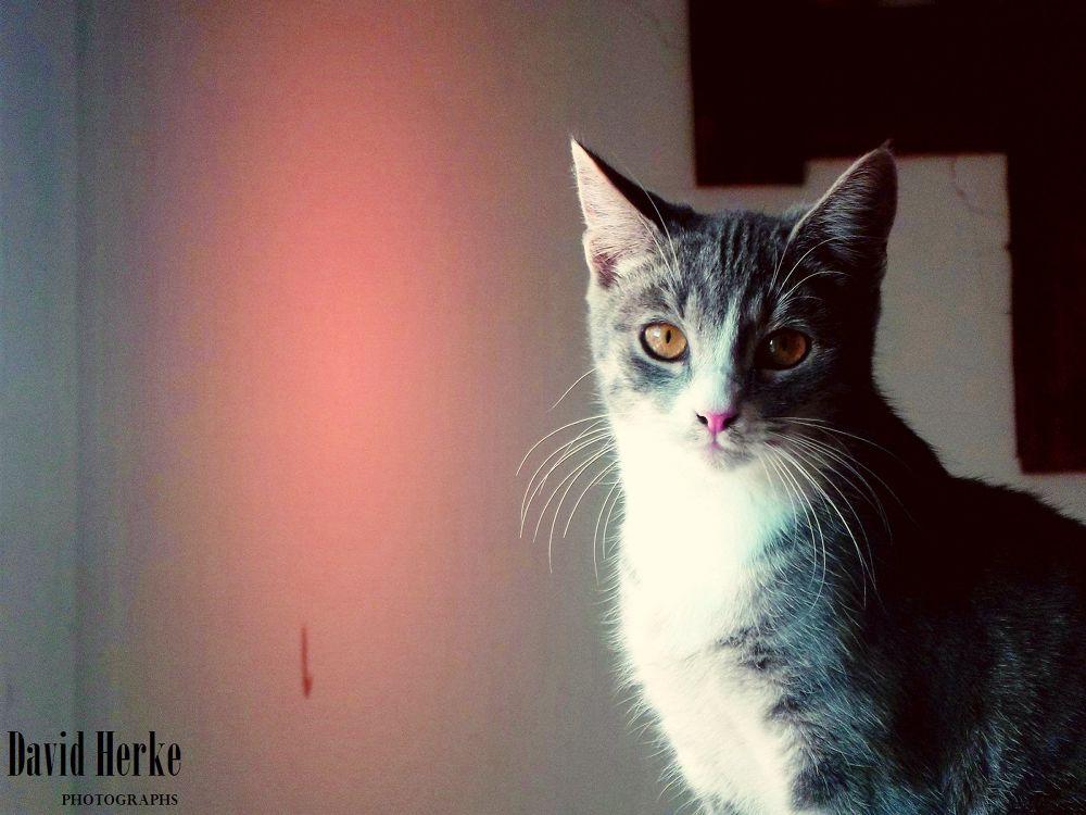 My cat. by DavidHerkePhotographs