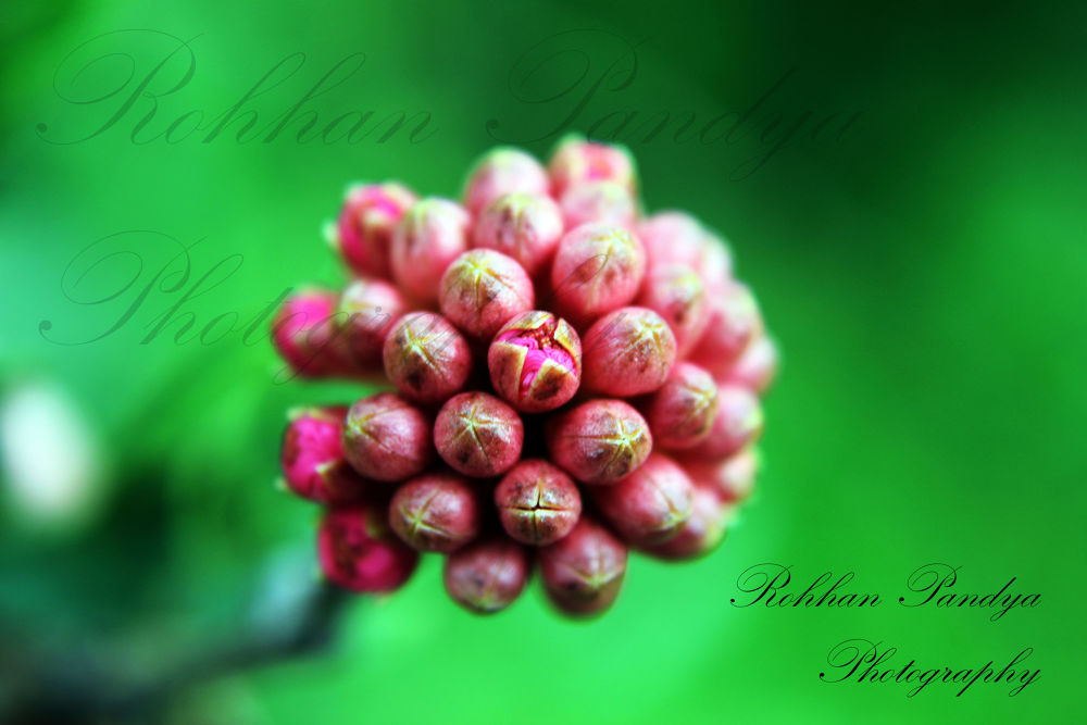 IMG_6160 by rohhanpandya