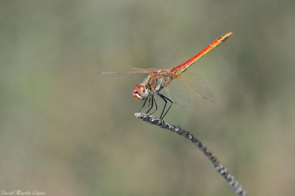 Fly or not fly... by davidmartinlopez