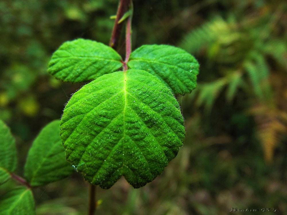 3 yeşil by brhmtl