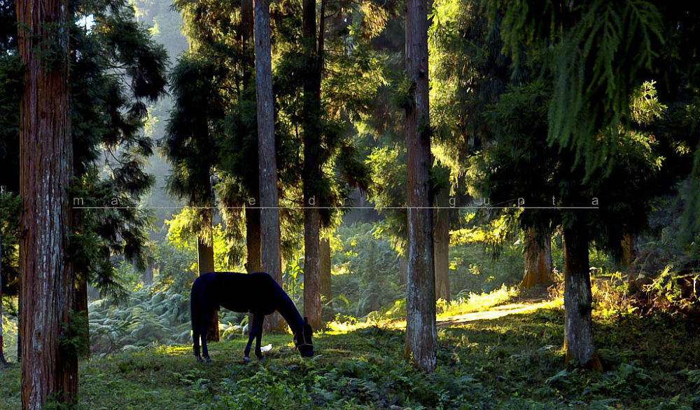 horse (1 of 1) by manabendragupta
