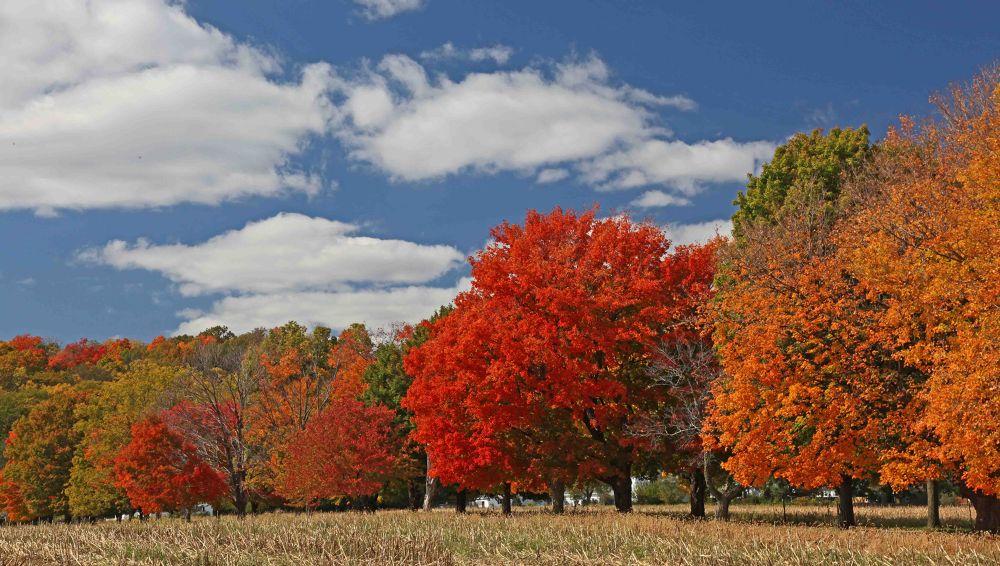 Foliage of Fall 13 by Alexstep