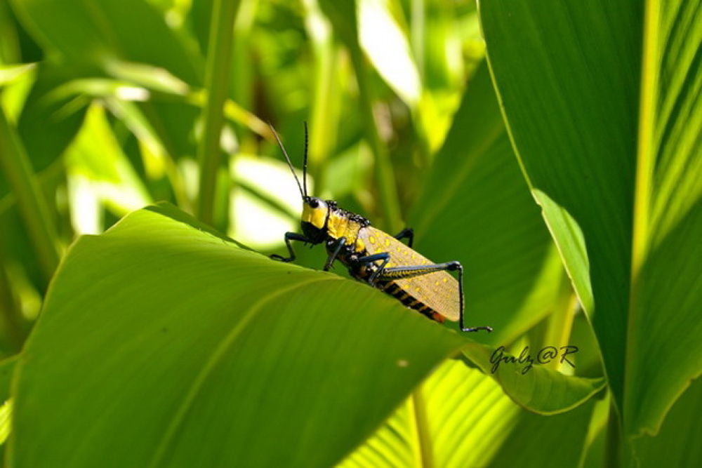 Photo in Random #insects #grasshopper