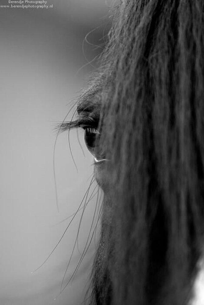 Horse eye by Brenda Passchier