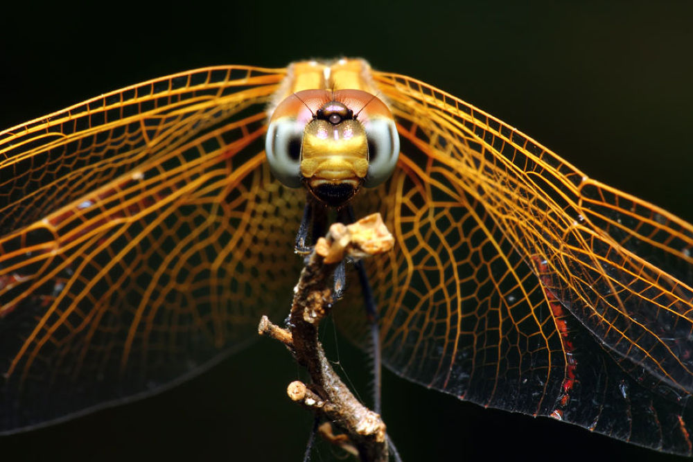 Dragonfly On Fire by karthikeyan