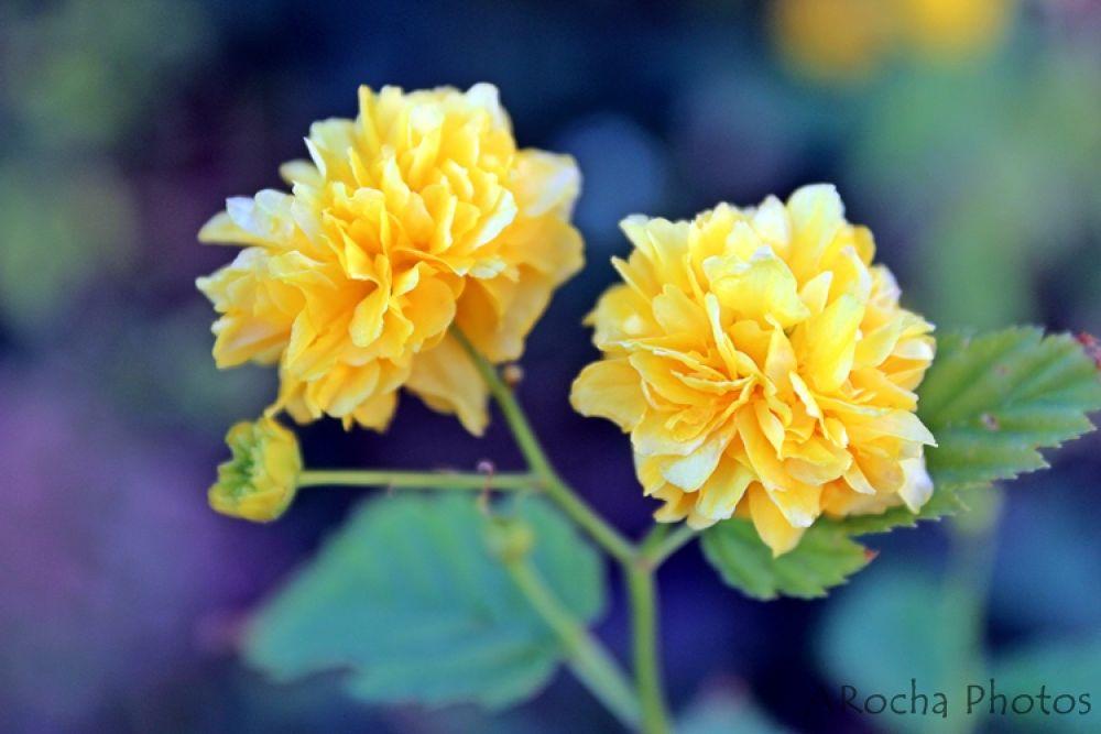 Yellow in Dark by AROCHA