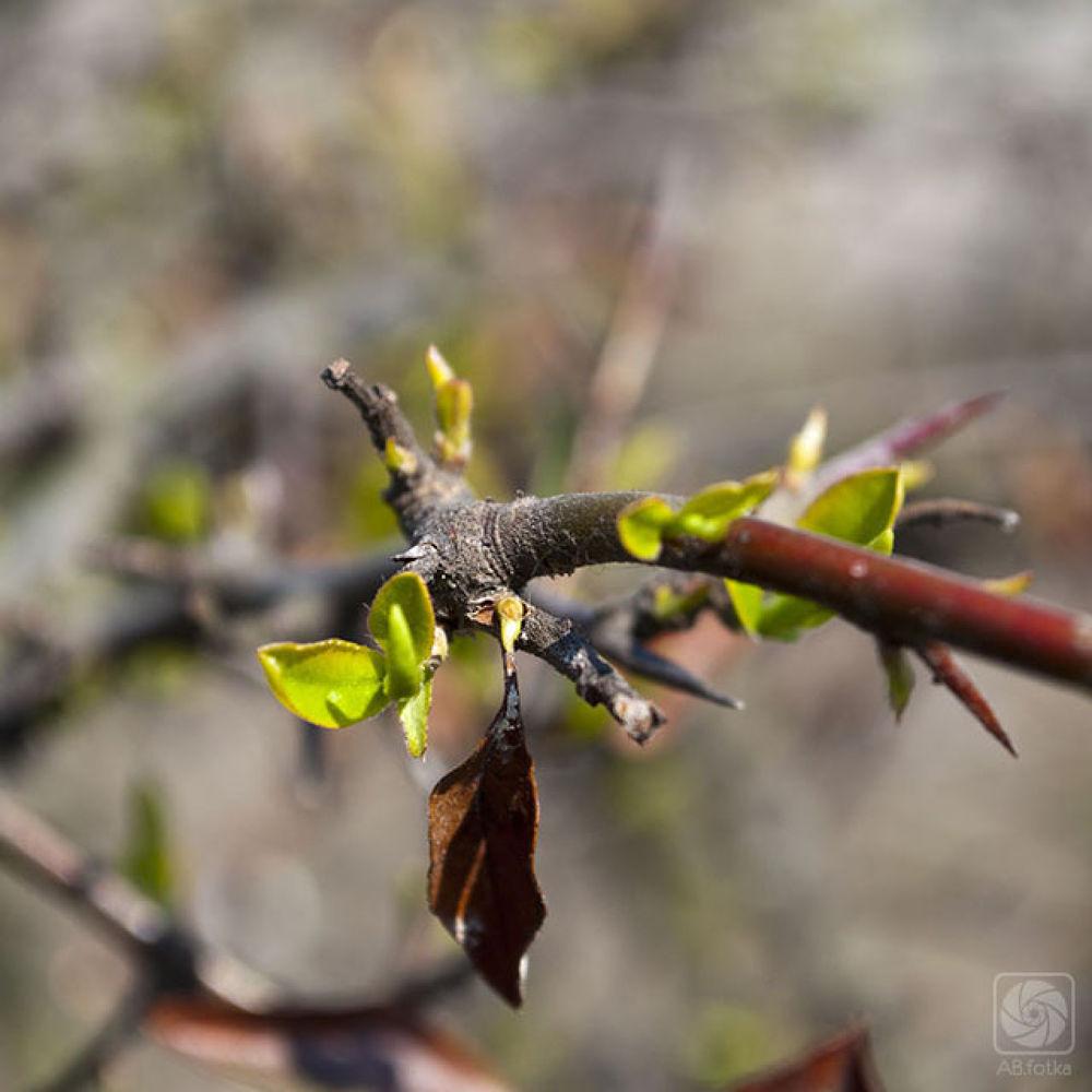 little branch by Adam Budziarek
