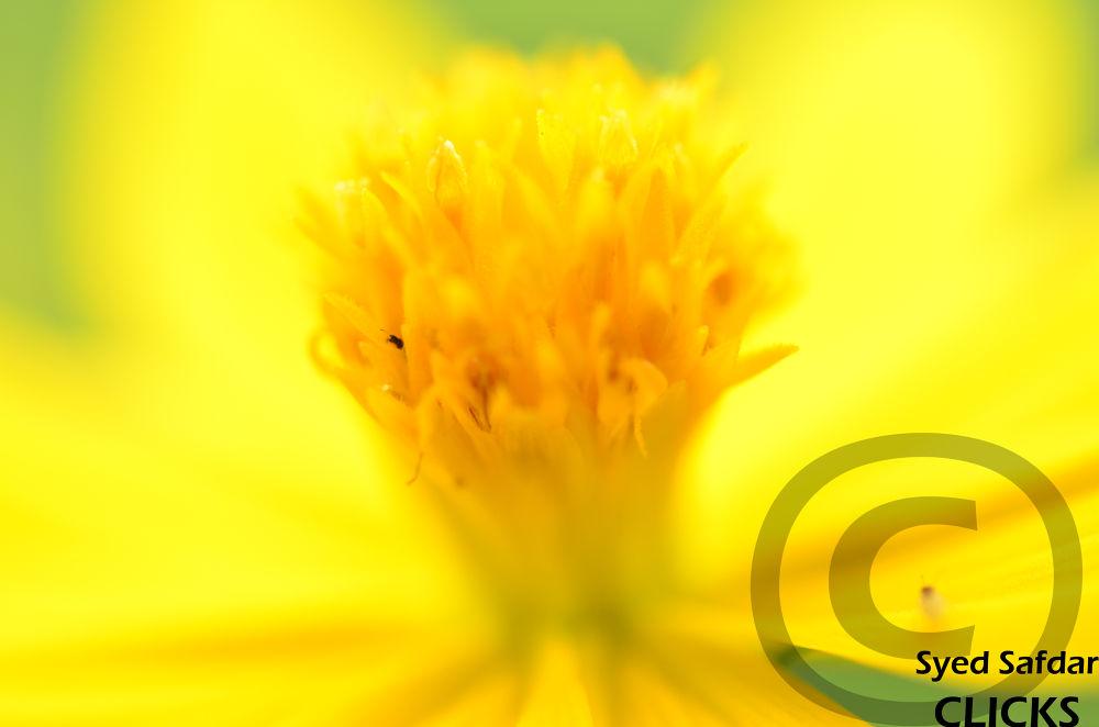 I am Yellow by syedsafdar