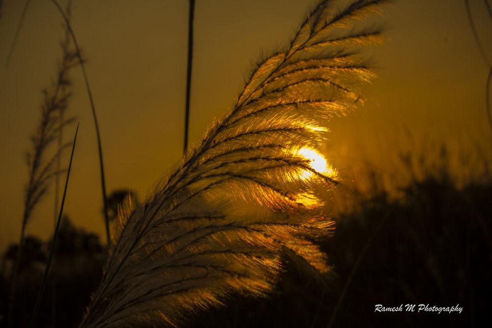 Golden Sunset by Ramesh Muthaiyan