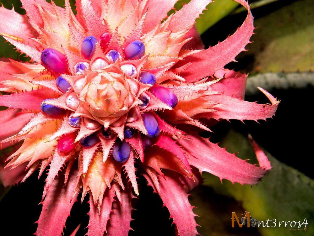 Monster flower by mont3rros4