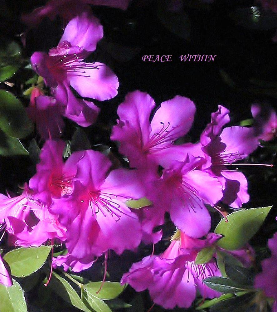 Purple Bliss by JUDITH HORN