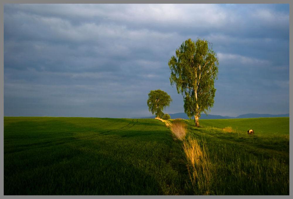 365 (1) by Zbigniew Gałucki
