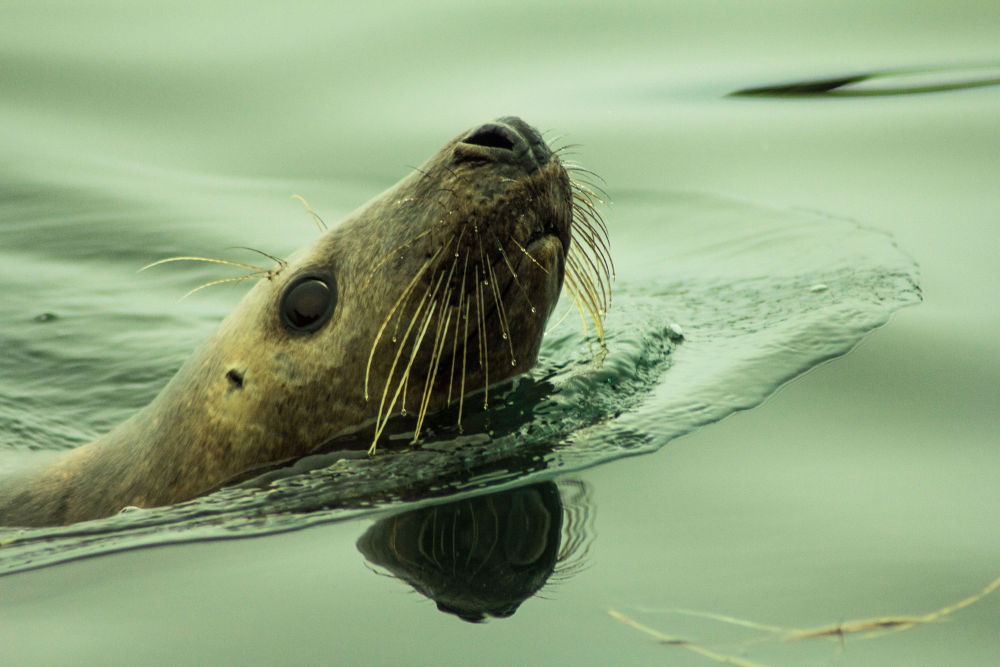 seal 5 by jeff
