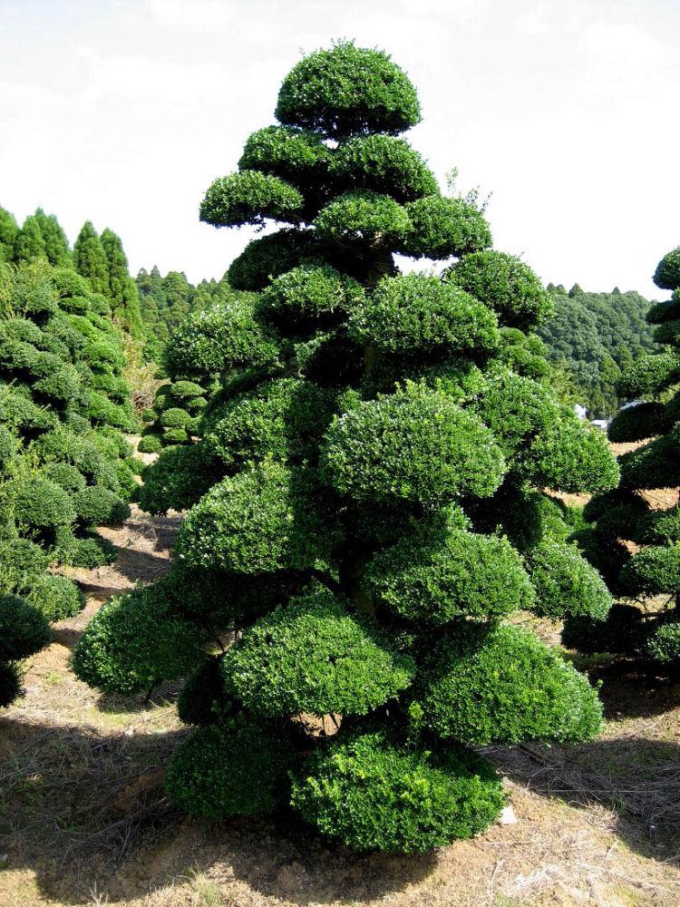 Japanese-Garden-Bonsai-111 by Arie Boevé