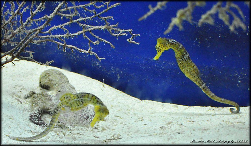 aquarium by rsphotography