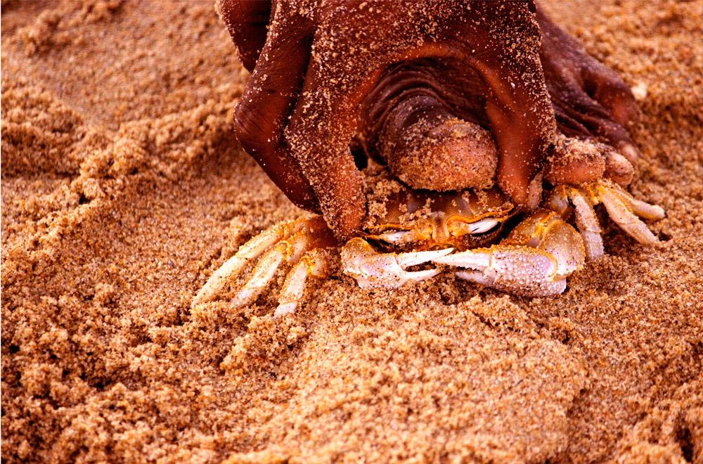 Crab Hunter by karthikkalvan