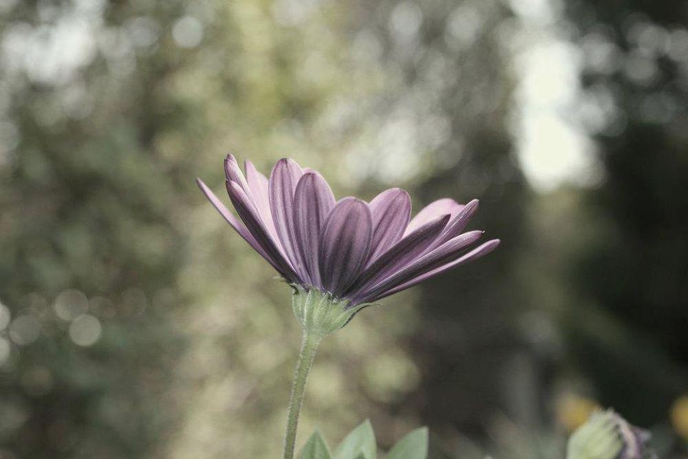 Garden Shots - Flowers Project by lirazdahann