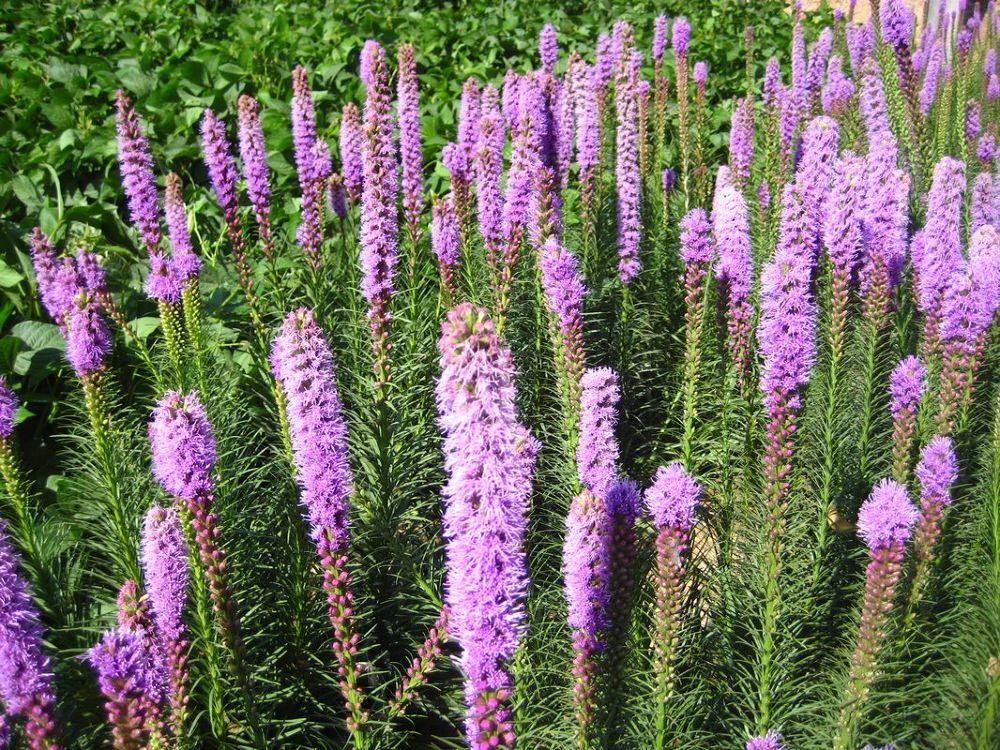 Perennial-wildflowers-163 by Arie Boevé