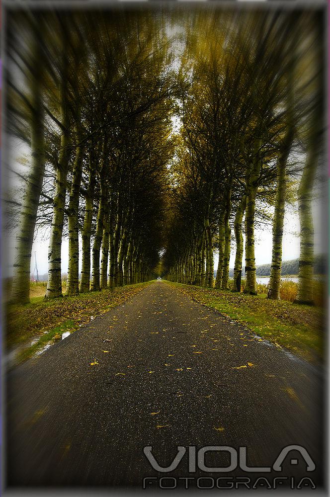 Rilland Holanda  by AugustoViola