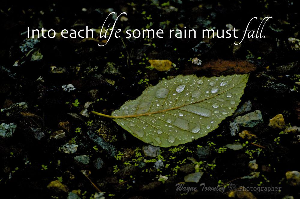 Rain_edited-1 by wayne15575