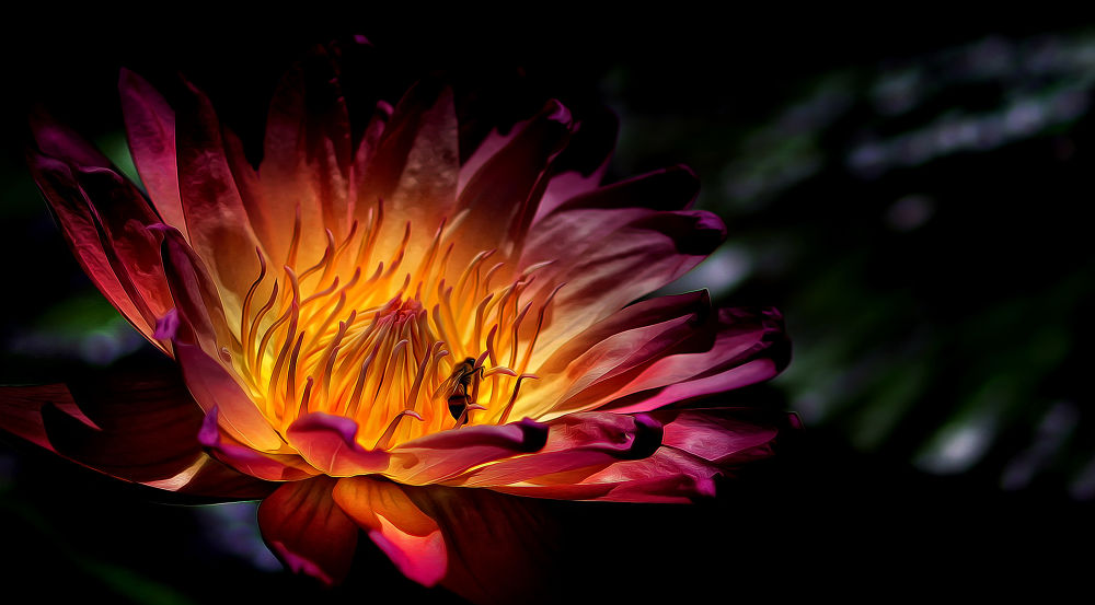 lily-bee-1-1 by Ray Bilcliff