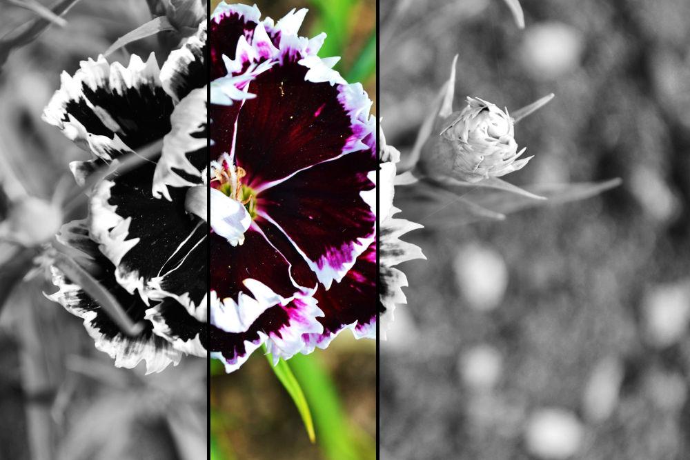 fLOWER by DilettaZap