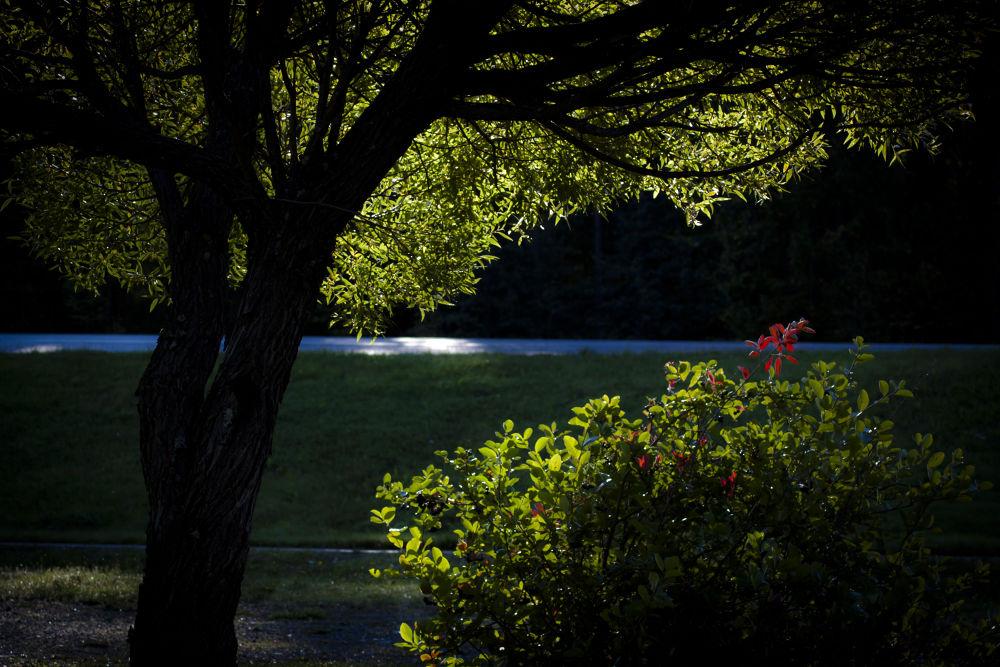 Lights by ipa67