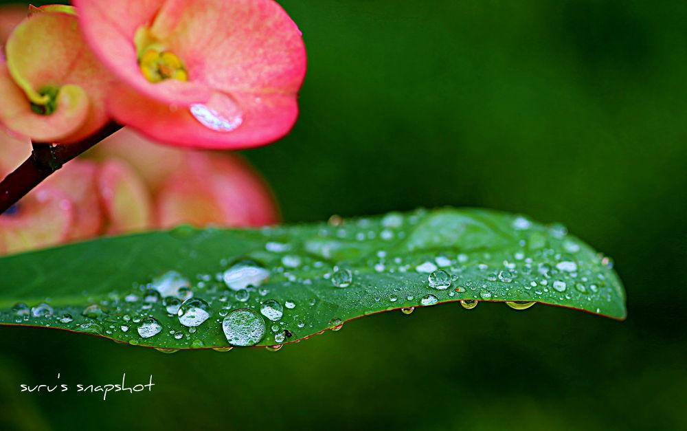 Crystal Drops..!! by surunair