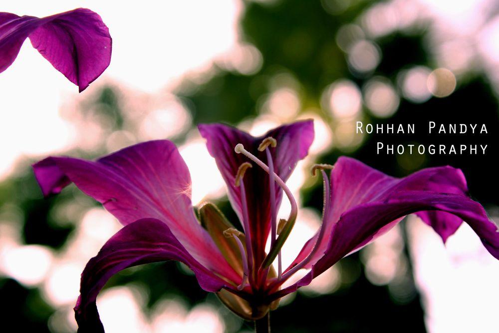 IMG_3822 by rohhanpandya